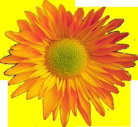 Клипарт цветы, фотографии цветов на ...: fotodryg.ru/clipart-photoshop-0.php?razdel=3&id=1&nom=3
