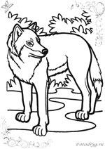 Раскраски волки